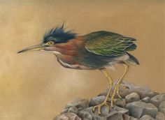 "Draw the Beauty of Nature with Mindy Lighthipe-Wildlife Art, Bird,Illustrative Art, Colored Pencil ""GREEN BACK HERON"" The Art of Nature, Fine Art by Mindy Lighthipe"
