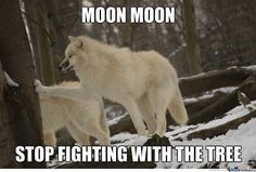 Moon moon not again