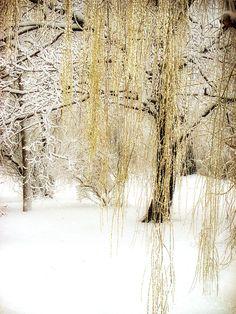 Winter Gold Photograph  - Winter Gold Fine Art Print