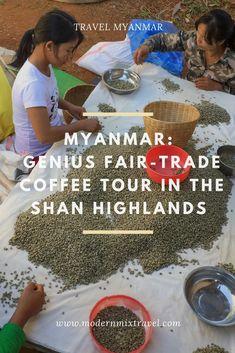 Myanmar Coffee: Fair-Trade Genius Coffee Tour in the Shan Highlands