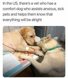 Cute Funny Animals, Cute Baby Animals, Funny Dogs, Animals And Pets, Cute Animal Memes, Cute Puppies, Cute Dogs, Dogs And Puppies, Doggies