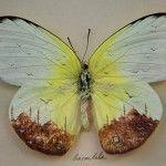 Hasan Kale make miniature art of Istanbul on a butterfly! #HasanKale #amazingart