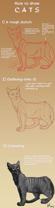 First part of the promised cat tutorial... How to draw a cat in general^^ Following tutorials will be: - a cat's head - paws - randomness (poses etc) I know the colouring is kinda shitty, but I was...