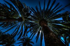 Palm to the Sky - A snap shot from Moneglia, Italy