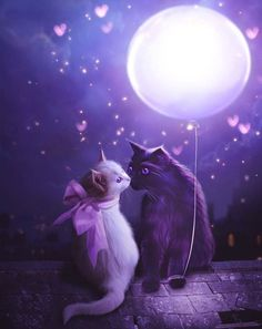 Tonight the moon kisses the stars.  ~Rumi