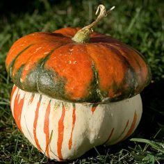Pumpkin or Acorn ? Pumpkin Squash, Pumpkin Art, Harvest Time, Fall Harvest, Harvest Moon, Garden Edger, Types Of Pumpkins, Vegetable Animals, Vegetable Pictures