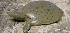 Reptiles and Amphibians of Ontario | A New Ontario Reptile and Amphibian Atlas | Species | Protect | Ontario Nature