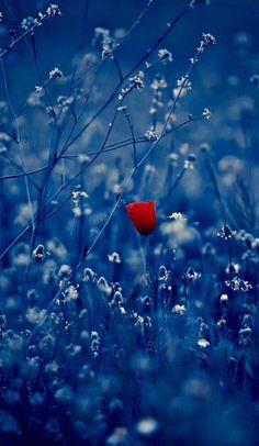 Original post by: http://imickeyd.tumblr.com/post/114773612230/rauro100-the-flower-by-una-cierta-mirada-on