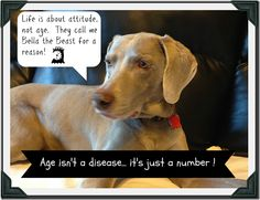 How to keep your senior pet healthy! - Ask Dr. Anna