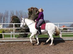 My horse Lluky in piaffe