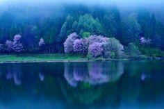 japan bound, blue, sakura tree, lakes, travel, place, lake nakatsuna, nagano