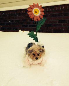 Daisy!!