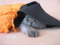 Deniz Simsek'in kedisi DUMAN
