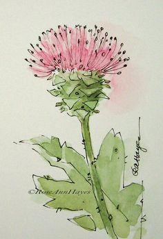 Texas Pink Thistle Original Watercolor Texas Wildflower
