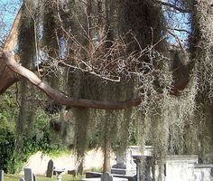 The Gateway Walk in Charleston, South Carolina: Things to See Along the Gateway Walk