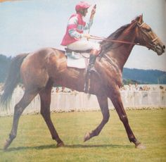 IL TEMPO (NZ) B g 1962, Time and Again (Ire) - Timing. Classy Kiwi stayer and winner of the 1969 & 1970 Auckland Cups, 1970 Chalmers Handicap, 1970 Wellington Cup etc, the latter in a then world-record time of 3:16.2 for the two miles.
