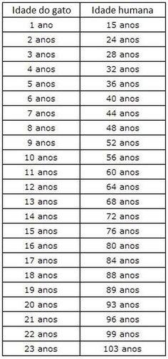 Veja a maneira correta de calcular a idade 'humana' de seu gato - Mega Curioso