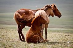 Very much real horse life. All The Pretty Horses, Beautiful Horses, Animals Beautiful, Cute Animals, Funny Animals, Farm Animals, Horse Ears, Funny Horses, All About Horses