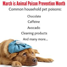 March is National Poison Prevention Month, including for animals! Did you know many commone household items are poisonous to your pet? Learn more about what threats are in your house and how you can prevent pet poisoning here, http://www.petpoisonhelpline.com/pet-owners/