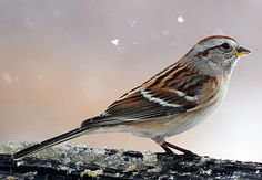the Sparrow is a reminder that idle hands (and idle minds) should be avoided in order to live a full, healthy life.