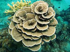 Hard Coral, Trip Advisor, Plants, Plant, Planets