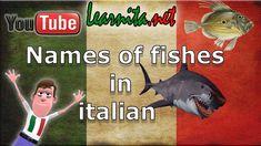 Names of fishes in italian - Learn italian language