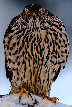 All Birds, Cute Birds, Pretty Birds, Birds Of Prey, Beautiful Birds, Bird Pictures, Nature Pictures, Rare Animals, Animals And Pets