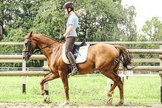 Es ist überraschend einfach, ein Pferd rittiger zu machen. Mit den universellen, leicht nachvollziehbaren Übungen von Dressurausbilderin Corinna Lehmann schafft das jedes Pferd-Reiter-Paar.