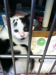 New kittens at Union County Animal Shelter!! Adopt today!