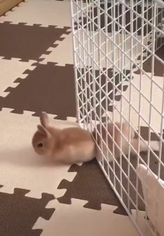Squeeze and sploot drôle # lapin # lapin # animal # animal # foru Baby Animals Super Cute, Cute Baby Bunnies, Cute Little Animals, Cute Funny Animals, Funny Bunnies, Cute Bunny Pictures, Baby Animals Pictures, Fluffy Cows, Funny Rabbit