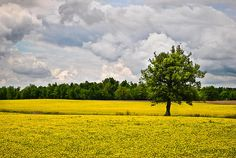 Lone Tree In Field Of Wildflowers by Greg Jackson - Lone Tree In Field Of Wildflowers Photograph - Lone Tree In Field Of Wildflowers Fine Art Prints and Posters for Sale