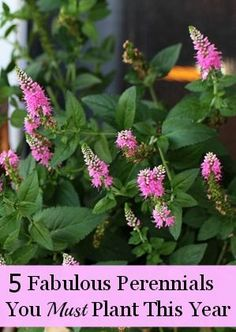 Five fabulous perennials for your garden this year