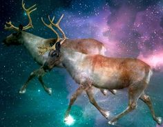 "The story of Santa and his flying reindeer can be traced to an unlikely source: hallucinogenic or ""magic"" mushrooms, according to one theory. Santa Story, Santa I Know Him, Origin Of Christmas, Christmas Traditions, Christmas Eve, Christmas Ornaments, Winter Solstice, Garden Gates, Tis The Season"