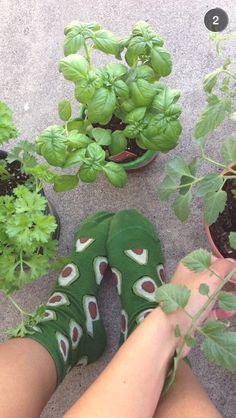 - ̗̀ plants are friends  ̖́-