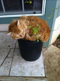 How to: Grow a cat I think this one needs repotting!