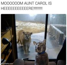awesome Mom Aunt Carol Is Here