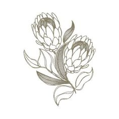 Protea designs that looks like hand drawn sketches. Protea Art, Flor Protea, Protea Flower, Ink Drawings, Realistic Drawings, Love Drawings, Kawaii Drawings, Flower Sketches, Art Sketches