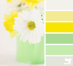 daisy brights- bright, light, and cheery for children's bldg. nursery- all except the brightest yellow.