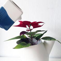 Boomtop & Vogel vase by Ping & Moos