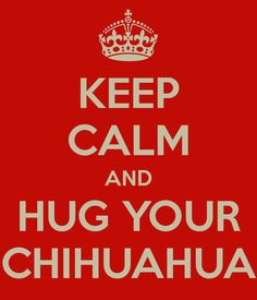 KEEP CALM AND HUG YOUR CHIHUAHUA--love my Chica Chihuahua!!