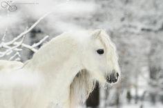 by Katarzyna Okrzesik Winter Horse All The Pretty Horses, Beautiful Horses, Animals Beautiful, Cute Animals, Winter Horse, Majestic Horse, Horses And Dogs, White Horses, Equine Photography