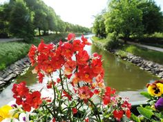 red flowers on canal