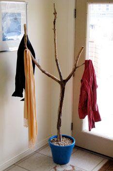 Backyard branch as a coat rack