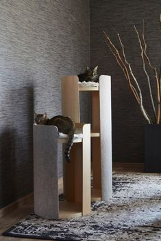 MiaCara - The German Design Label for innovative & sophisticated dog and cat products for a beautiful living with your dog and cat. Animal Gato, Pet Furniture, Modern Cat Furniture, Modern Cat Beds, Luxury Furniture, Cat Shelves, Cat Playground, Cat Scratching Post, Cat Room