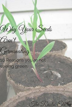 You started your seeds, you're all excited to watch them grow and get your garden started. Not one little fleck of green. Here are 10 reasons your seeds aren't germinating. Garden Seeds, Planting Seeds, Organic Gardening, Gardening Tips, Vegetable Gardening, Urban Gardening, Indoor Gardening, Plant Needs, Seed Starting