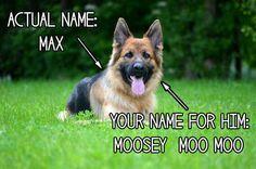 Inventou um apelido para seu cachorro que não tem relação nenhuma com o nome dele.