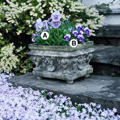 Try Mixing Styles: This very decorative container needs nothing more than the simplicity of pansies and violas to dress it up perfectly. Once spring fades and the heat comes on, try adding geraniums or angelonia for summer color.  A. Pansy (Viola 'Imperial Silver Blue'): 2  B. Viola 'Penny Deep Marina': 4