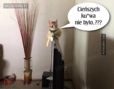 Wtf Funny, Funny Memes, Animals And Pets, Funny Animals, Can't Stop Laughing, Best Memes, Dog Cat, Lol, Poland