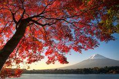 5 Reasons Why You Goatta Come to Fujigoko in Autumn | YUGA KURITA, a professional photographer based in Japan
