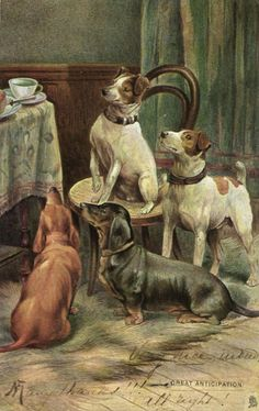 Dachshund Teckel Dackel dogs terrier